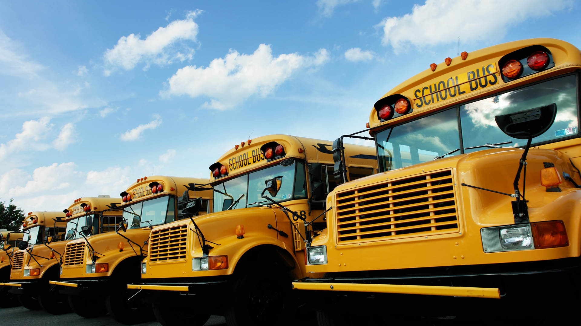 A line of yellow school buses under a bright blue sky